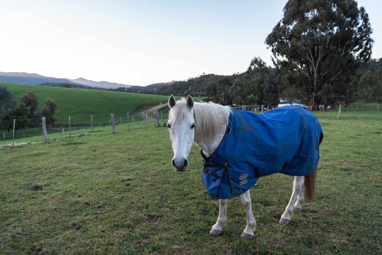 What To Consider When Buying A New Horse Rug