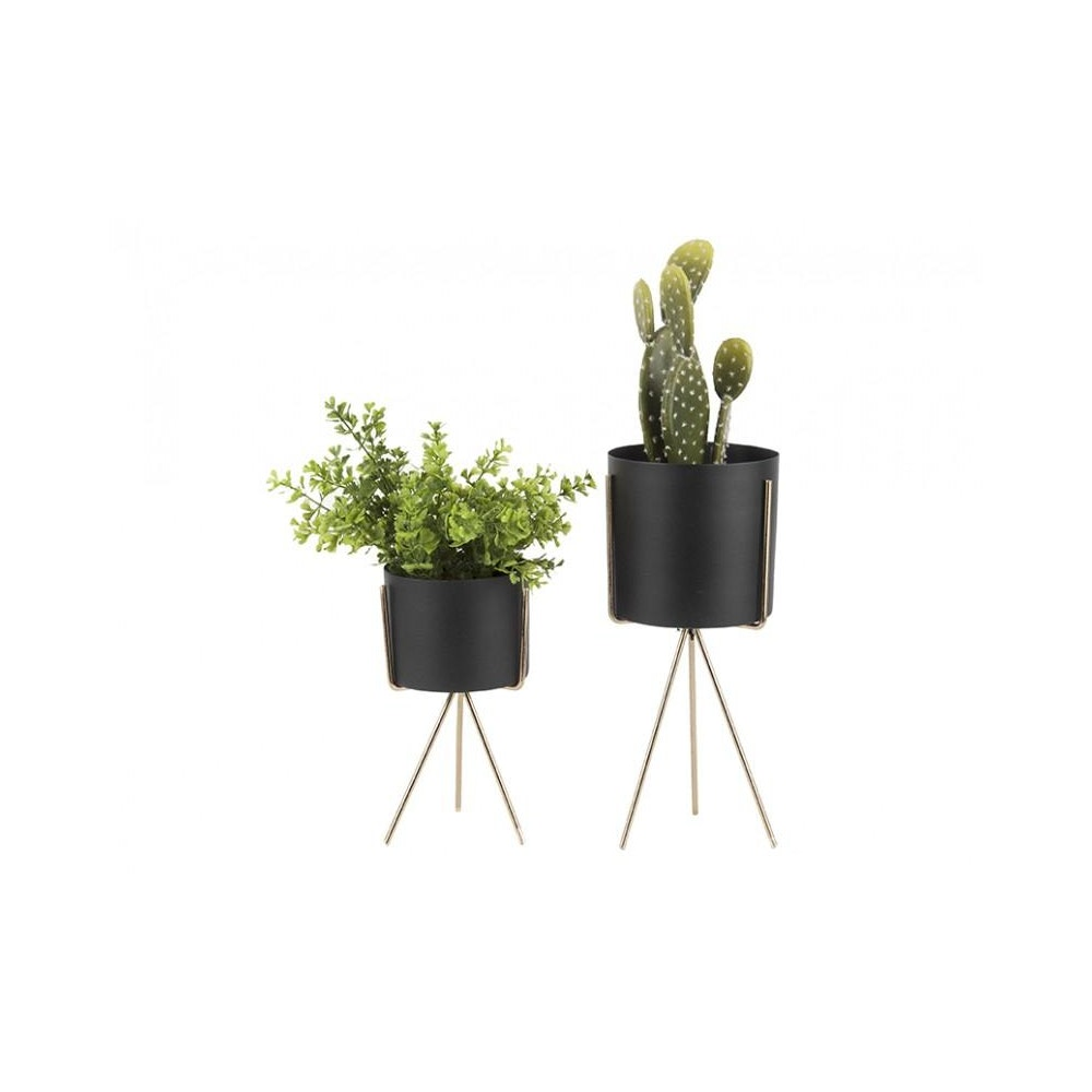 Pretty Cactus Plants  Metal Planter On Pedestal -medium - Black - 12.5cm Diameter